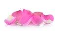 Closeup on lotus petal on white background Royalty Free Stock Photo