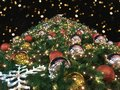Closeup low angle or bottom view of giant christmas tree with bokeh in the night on black background Royalty Free Stock Photo