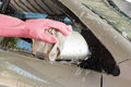 Closeup man's hand in a pink gloves washing a wing mirror of car Royalty Free Stock Photo
