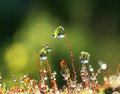 Closeup moss with Sun beams in forest Royalty Free Stock Photo