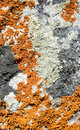Closeup of Multi Colored Lichen Stock Images