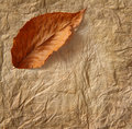Closeup of old  parchment paper with leaf Stock Image