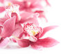 Closeup on orchid blossoms on white text space brunch of background Royalty Free Stock Photos