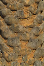 Closeup of palm tree trunk texture the a caked with red mud Royalty Free Stock Images