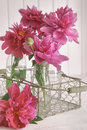 Closeup of peony flowers in bottles pink Royalty Free Stock Images