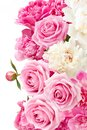 Closeup of peony flowers, fluffy pink peonies flowers, peony bunch in vase on the table Royalty Free Stock Photo