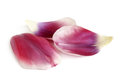 Closeup petals of tulip Royalty Free Stock Photography