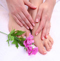 Closeup photo of a beautiful female feet with red pedicure  on white Royalty Free Stock Photo