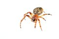 Closeup photo of a spider isolated on white Stock Image