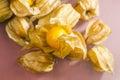 Closeup of physalis peruviana fruits with reflexions light grey background and Stock Photos