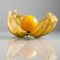 Closeup of physalis peruviana fruits with reflexions light grey background and Stock Images
