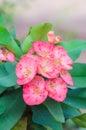 Closeup Pink Nature Flower