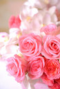 Closeup of pink rose Stock Images