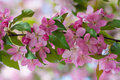 Closeup of pink spring flower Royalty Free Stock Photo