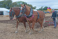 Closeup of plowing with horses Royalty Free Stock Photo