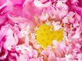 Flower. Beautiful blooming water lily on the water surface. Natural colorful blurred background. Nymphaea