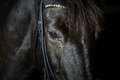 Closeup portrait of black horse in the dark Royalty Free Stock Photo