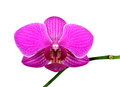 Closeup of a purple orchid isolated on white Stock Photos