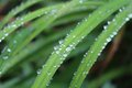 Closeup of raindrops on plant