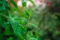 Closeup raindrops on stem and leaves Royalty Free Stock Photo