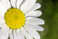 Closeup Of A Rare Flower In Th...