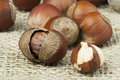 Closeup raw hazelnuts on burlap Royalty Free Stock Images