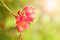 Closeup of red flower with shallow depth of field in early morning Royalty Free Stock Images