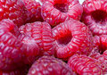 Closeup of red raspberries rubus idaeus Royalty Free Stock Photos