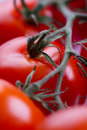 Closeup of red tomatoes Royalty Free Stock Photo