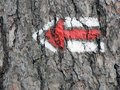 Directional arrow on tree Royalty Free Stock Photo