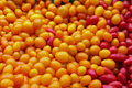 Closeup of Red and Yellow Jellybean Tomatoes Royalty Free Stock Photo