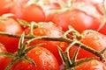 Closeup ripe fresh cherry tomatos Royalty Free Stock Photo