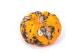 Closeup of  rotten pumpkin Royalty Free Stock Photo