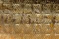 Closeup Shiny Scales Salmon Fi...