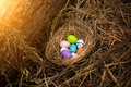 Closeup shot of colorful easter eggs lying in nest at forest Royalty Free Stock Photo