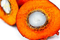 Closeup shot of cut oil palm fruit Stock Images
