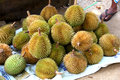 Closeup shot of durian fruit in sri lanka Royalty Free Stock Photo