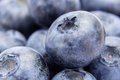 Closeup shot of fresh ripe blueberries Royalty Free Stock Photo