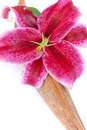 Closeup shot of a gorgeous lily flower Stock Photography