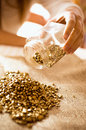 Closeup shot of miner empties the jar with gold on the burlap photo Stock Photography