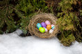 Closeup shot of painted Easter eggs hidden in nest at backyard Royalty Free Stock Photo