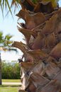 Closeup shot of trunk of palm tree Stock Photos