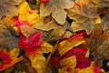 Closeup of silk autumn leaves red yellow brown Royalty Free Stock Photos