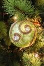 Closeup of Single beauty green circle Christmas-tree decorations Royalty Free Stock Photo