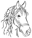 Closeup sketch of horse head black Royalty Free Stock Photos