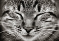 Closeup of sleeping cat face Royalty Free Stock Photo