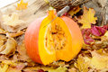 Closeup of a slice  pumpkin to make soup or pie Royalty Free Stock Photo