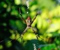 Closeup spider Royalty Free Stock Photos
