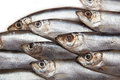 Closeup of sprat fish a variety freshly caught a small european also known as bristling brisling or skipper species Stock Photography