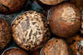 Closeup of stack coconut shell in water Stock Photography